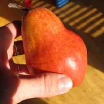 Redish Orange